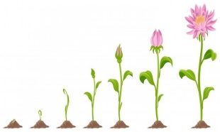 29be767f7d0547ddba5aabfb4a488b77_growing-flower-clipart-clipartxtras_600-360