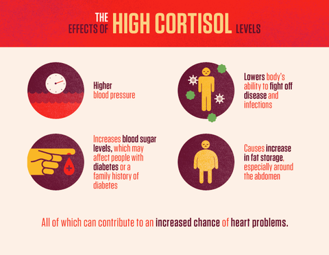 High Chronic Cortisol Levels Predict Cardiovascular Disease (CVD) in Seniors